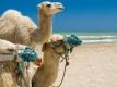 All inclusive vakantie Tunesië